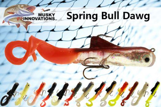 Spring Bull Dawg
